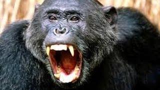 Охота на охотника — Нападения в джунглях. Документальные фильмы National Geographic HD