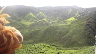 Lewis the Lion sees some tea plantations in Malaysia