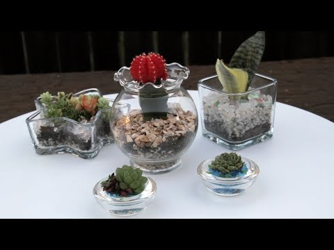 How To Create Succulents in Gl Containers - YouTube Desert Plants House Arrangment on blue house plants, black house plants, prehistoric house plants, beach house plants, forest house plants, lake house plants, desert plant identification, plants house plants, sunset house plants, fruit house plants, dessert house plants, coffee house plants, jungle house plants, desert yucca plant, cactus house plants, alpine house plants, tropical house plants, prairie house plants, california house plants, river house plants,