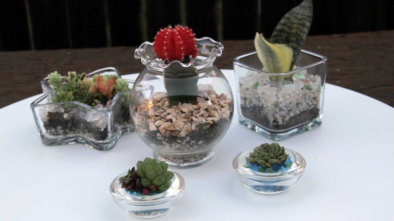 How To Create Succulents In Glass Containers Youtube