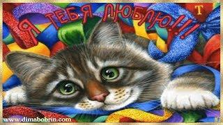Котик - А.Рыбак. Cat - A.Rybak.
