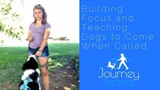 Teach Your Dog to Come Around Distractions AND Build Focus