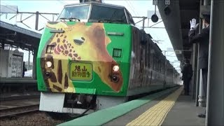 JR北海道 キハ183系【旭山動物園号】 岩見沢駅