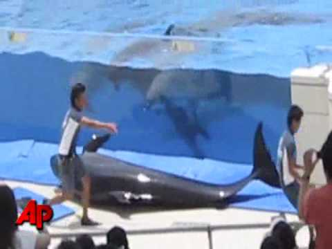 Raw Video: Dolphin Jumps Out of Tank During Show