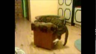 sleeping cat walking
