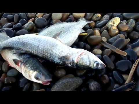Pesca De Lizas Y Lornas