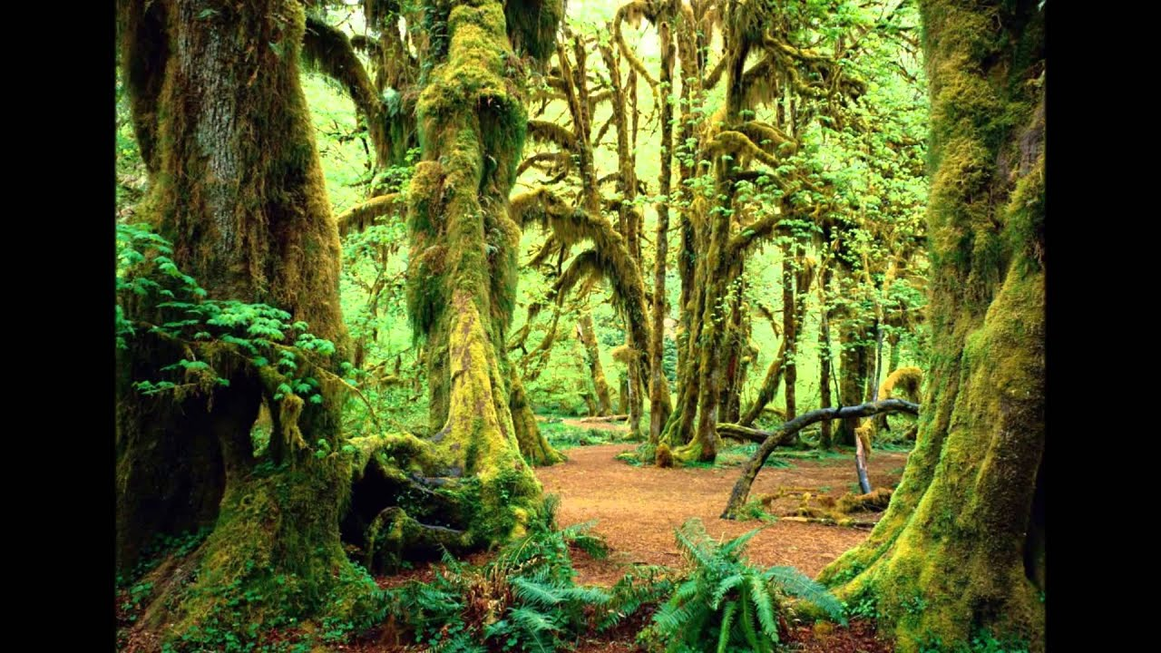 Wallpaper 3d Animado Naturaleza Bosques Hd 3d Arte Y Jardiner 237 A Dise 241 O De
