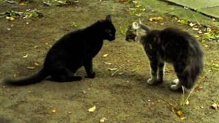 Кот уходит постепенно.../ Cat goes away slowly...