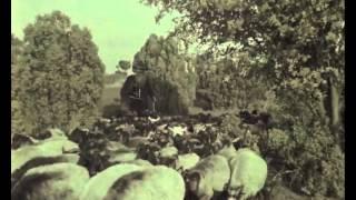 Grün ist die Heide (1951) - Jetzt auf DVD! - mit Sonja Ziemann, Rudolf Prack - Filmjuwelen