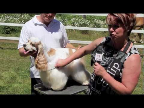 Cocker Spaniel Grooming - Part 3 of 7