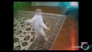 Коты танцуют 😻 😺 ♌