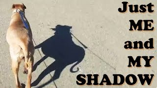 Just Me And My Shadow - Dog Walking Morning Walk Exercise - Dogs Barking Bark Noise - Jazevox Videos