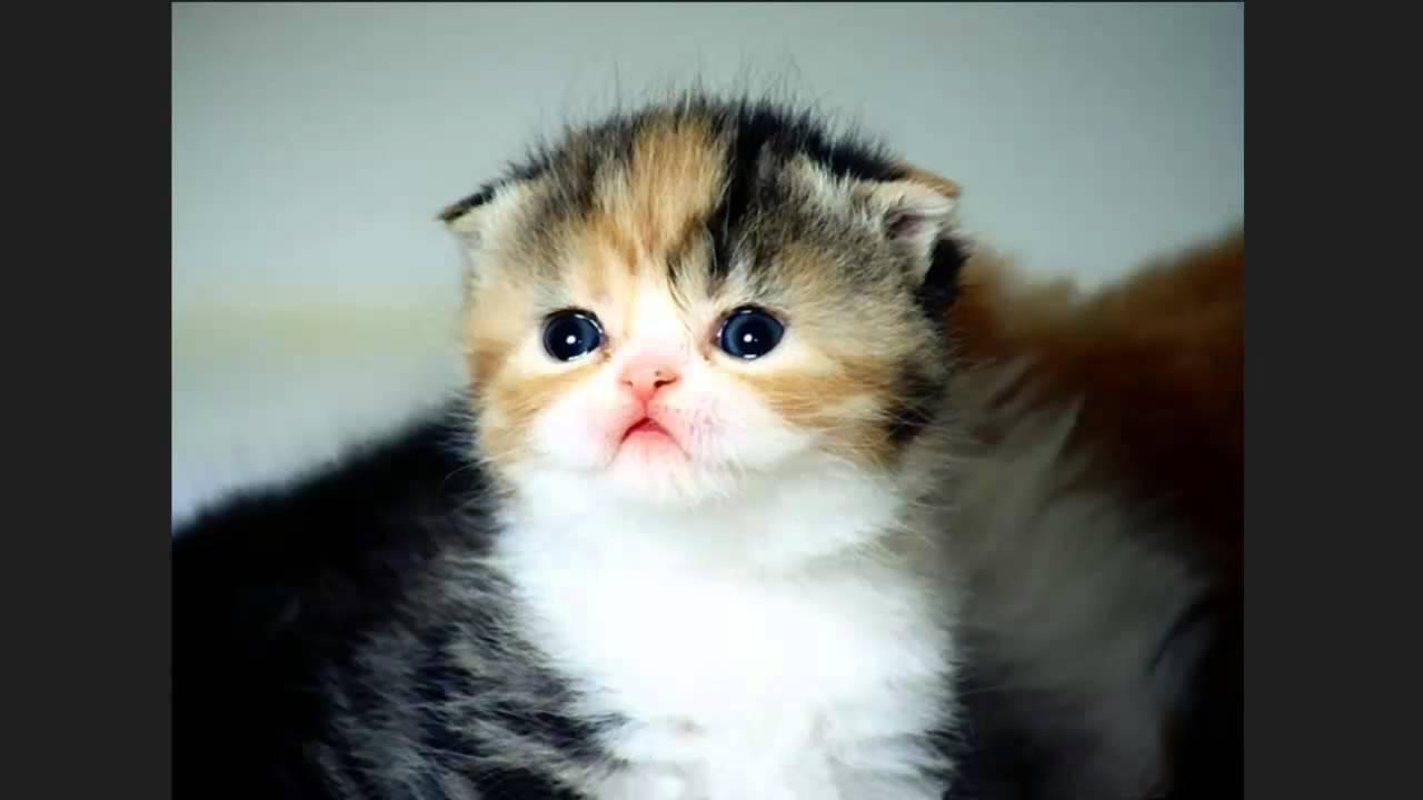 Katze Weint