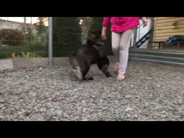 Female # 02  for sale 3.5 months (video 2)