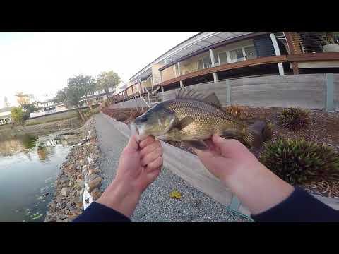 Urban Gold Coast Bass Fishing / 83cm Bass!!