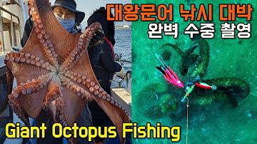 생애 첫 대왕 문어낚시 대박! 생생 수중 영상 - Giant Octopus lure fishing, underwater camera