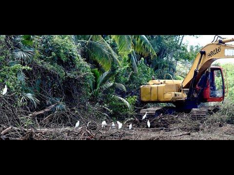 Mangrove Massacre - Vote For Our Mangroves!