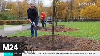 """Смотреть видео Столичная акция """"Наше дерево"""" прошла в Битцевском лесу - Москва 24 онлайн"""