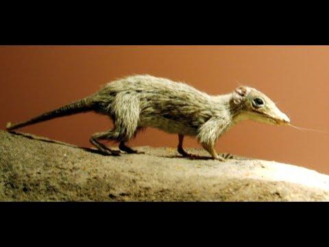 Early Mammal Evolution