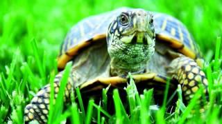 Почему черепаха отказывается есть, мало двигается и постоянно спит?