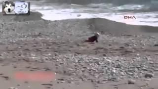 Ребенок пополз к морю - Что сделала Собака, смотреть супер !