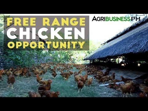 Free Range : Pamora Free Range Chicken Success Story #Agribusiness