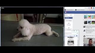 Cardíaca insuficiência cão edema