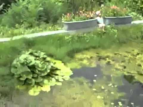 cheap pond useing green tarp