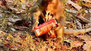 OMG! Boom cocacola, Big monkey make cocacola boom, Pity adorable newborn, Newborn wet cuz of mom