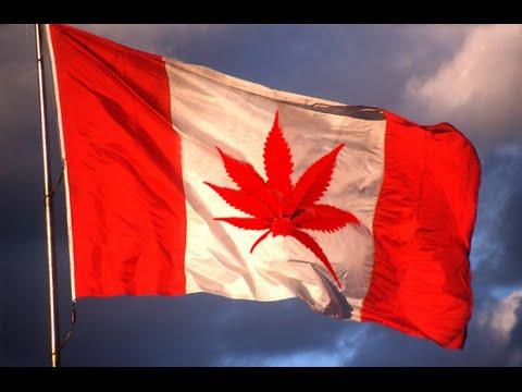The Redbeard Show #97: Oh Cannabis!