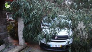Noite de temporal causou estragos em todo o concelho de Guimarães