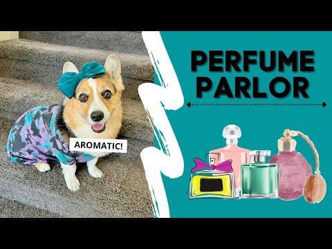 Dog Manages Fragrance Shop #shorts #corgi