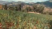 Интернет-магазин семян «фермер центр» предоставляет возможность купить семена оптом высокого качества и товары для их защиты. Доставка.