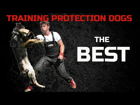 Kick start 2020 with amazing protection dogs .Schutzhund dog training in Germany .