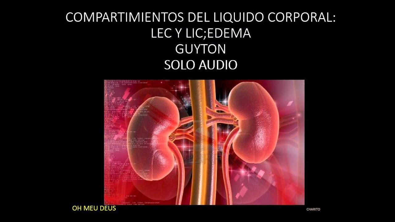 FISIOLOGIA GUYTON -CAP 25 audio-1(escucha y aprende) - YouTube