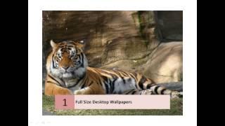 Fullscreen Photos On Desktop Wallpapers