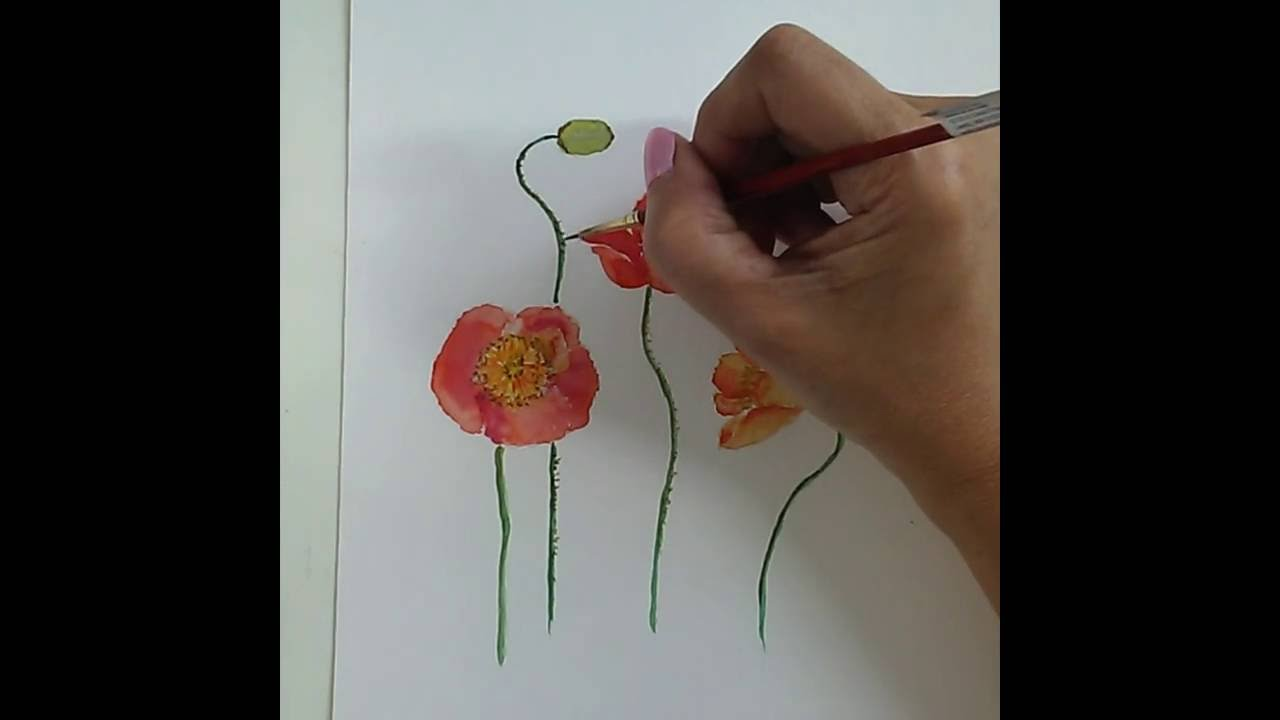 Aquarell Für Anfänger Mohnblumen Malen Watercolor For Beginners