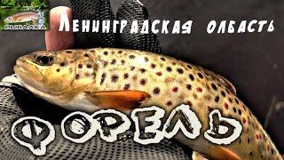Форель малой реки Рыбалка в Ленинградской области Апрель 2020