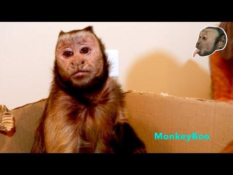 Monkey Easter Egg Foraging!