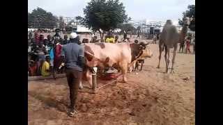 safinatoul aman Magal Touba 2015 Cheikh Bethio
