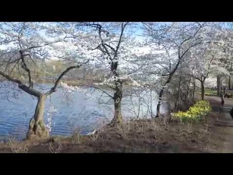 Essex County Cherry Blossom Festival Branch Book Park, in Newark, New Jersey USA