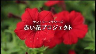 花を通して一人でも多くの人に笑顔の輪を広げたい。 そんな思いから始ま...