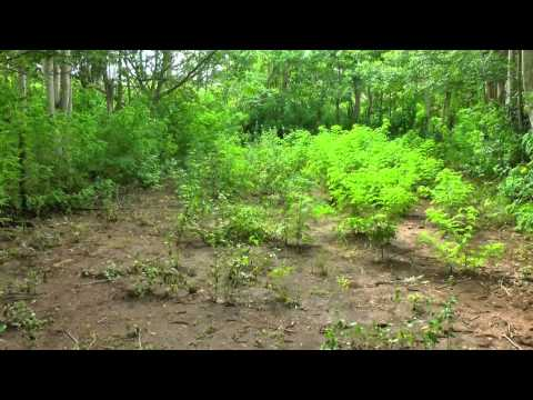 Land for lease in Bali - Pecatu Bukit 45 are
