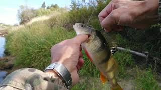 Рыбалка на Вычегде 29 08 Сход щуки с джига