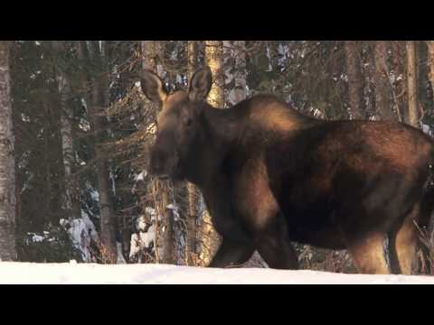 Spectacular footage shot on location /  Anchorage  Lake Hood