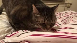猫アイスクリーム 頭キーン、萌え顔、フレーメン現象?