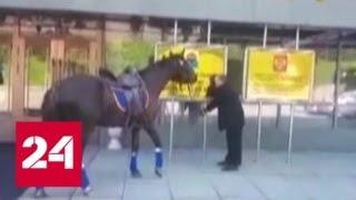 Депутат в знак протеста прискакал на сессию Заксобрания на коне - Россия 24