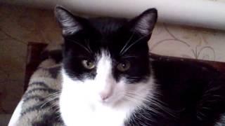 Кот смотрит сериал реальные пацаны
