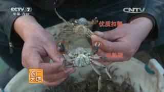 20160710 农广天地  河蟹养殖