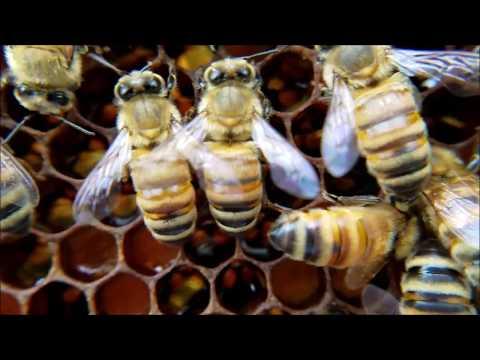Beginner Beekeepers Must Watch!